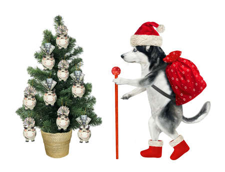 A dog husky in a Santa Claus clothing with a staff and a bag is walking near a Christmas tree. White background. Isolated. Stock Photo