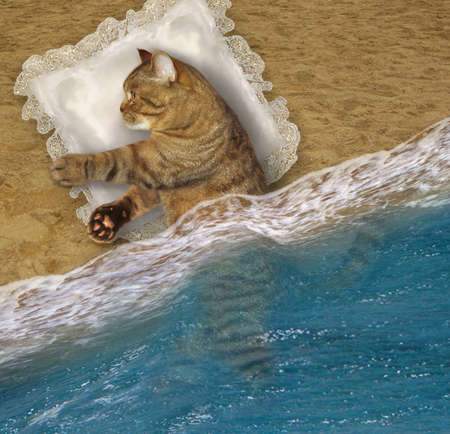 A beige cat sleeps on a pillow on the beach of the sea. Stock Photo