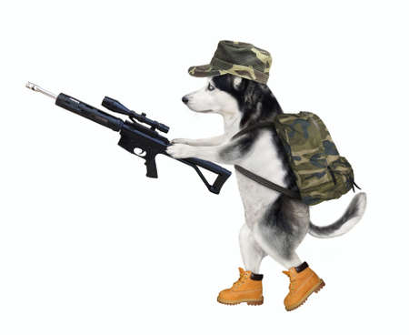 A dog husky in military uniform is walking with an assault rifle with optical sight. White background. Isolated.