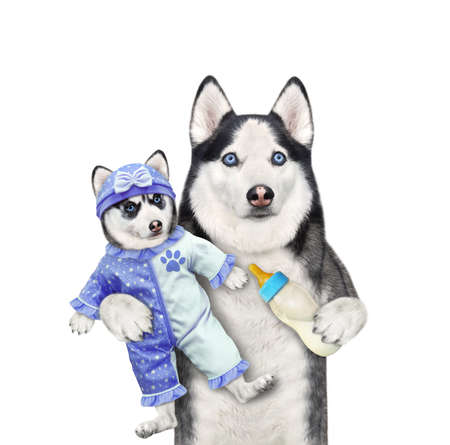 A dog husky holds its puppy dressed in a blue bodysuit baby and feeds it with milk. White background. Isolated.