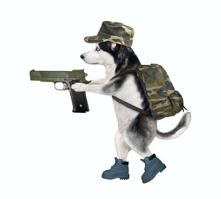 A dog husky in military uniform is walking with a handgun. White background. Isolated.