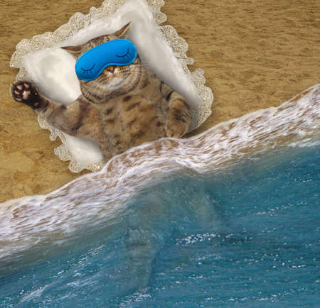 A beige cat in a blue mask sleeps on a pillow on the beach of the sea.