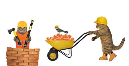 A beige cat builder in a construction helmet pushes a wheel barrow full of red bricks. White background. Isolated.