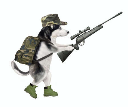 A dog husky in military uniform is walking with a rifle with optical sight. White background. Isolated. Stock Photo