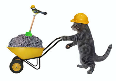 A gray cat builder in a construction helmet pushes a wheel barrow full of crushed stone. White background. Isolated.