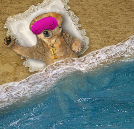A beige dog in a pink mask sleeps on a pillow on the beach of the sea.