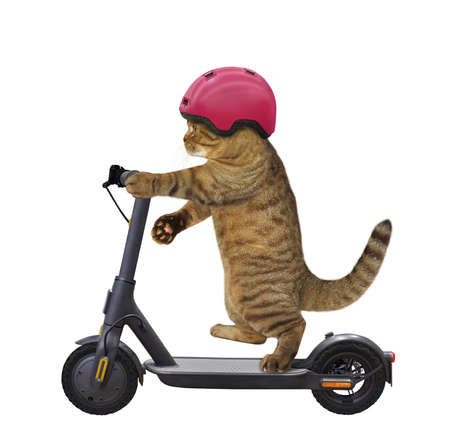 A beige cat in a bicycle helmet is riding a black electric scooter. White background. Isolated. Stock Photo
