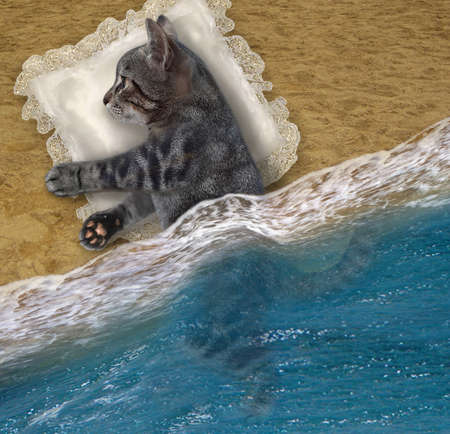 A gray cat sleeps on a pillow on the beach of the sea.