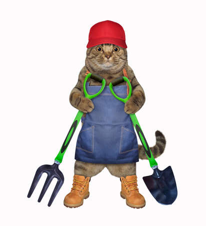 A beige cat gardener in a blue apron, a red cap and boots holds a shovel and a garden pitchfork. White background. Isolated. Stock Photo