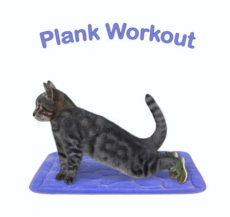 A gray cat is doing plank exercise workout on a blue fitness mat. White background. Isolated.