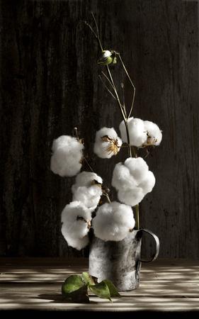 Cotton flower close up in pewter mug