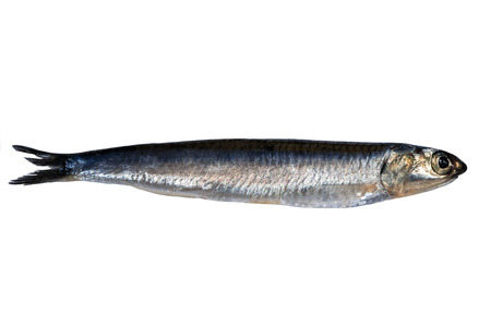 Whole fresh anchovy isolated on white background