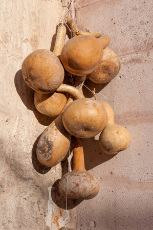 Dried bottle gourd on the wall in Goreme Cappadocia, Calabash gourd, Flowered gourd, White flowered gourd Lagenaria