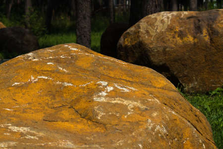 huge yellow stones on blurred background of green forest