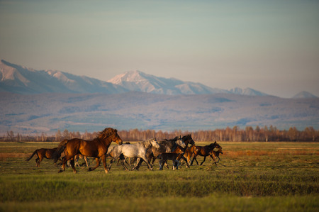 Grazing horses at sunset photo