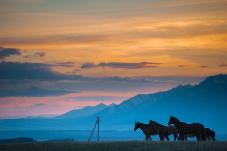 Beautiful bay horse herd grazes in the mountains at sunset, amazing hipster sunny natural background. photo