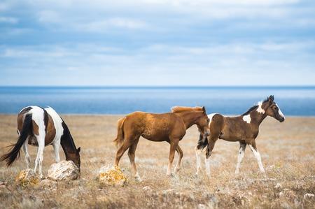 Horse in a field, farm animals, Russia