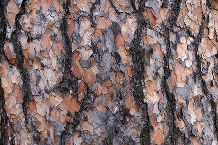 The texture of the bark of a natural tree.