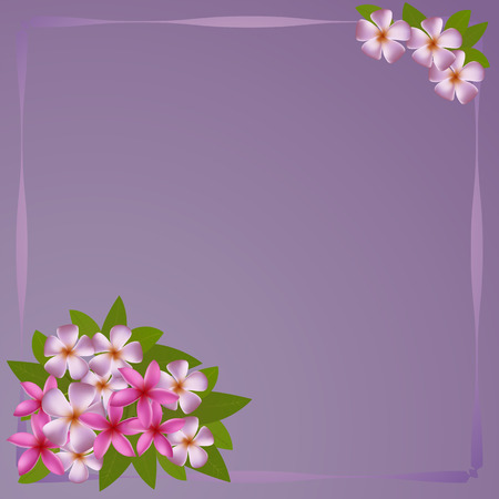 plumerias: Card with white and pink plumerias on purple background , may be used as a Womans Day congratulation