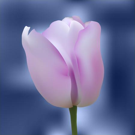 flores moradas: Realista tulipán púrpura en el fondo abstracto. Ilustración del vector.
