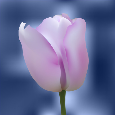 blue flowers: Realistic purple tulip on abstract background. Vector illustration.
