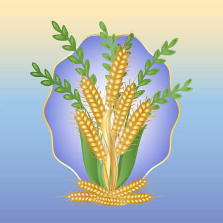 grasses: Bouquet of ears of wheat and grasses on a blue background Illustration