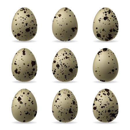 Realistyczne jaja przepiórcze na białym tle na białym tle. Ilustracje wektorowe