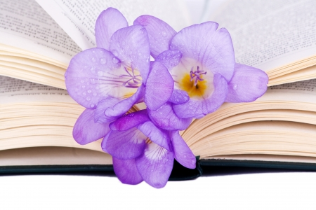 Purple Freesia on an open book isolated