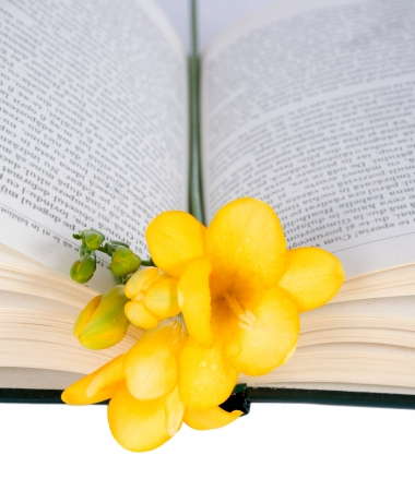 Open the book and freesia isolated on white background