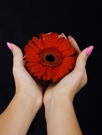 Open female hands keeping a daisy flower as concept for giving life