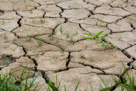 cracks in the land in rural areas