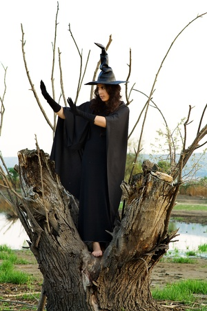 Halloween Witch hid in a hollow tree, and preparing new villainy Stock Photo - 17347099