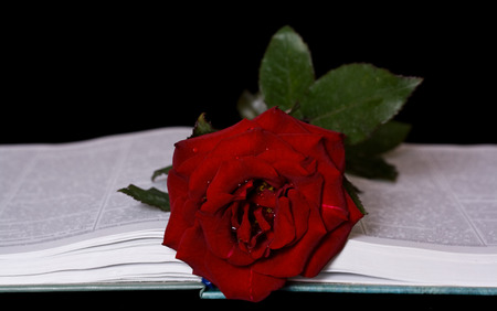Rose and book for st. george day or valentines day