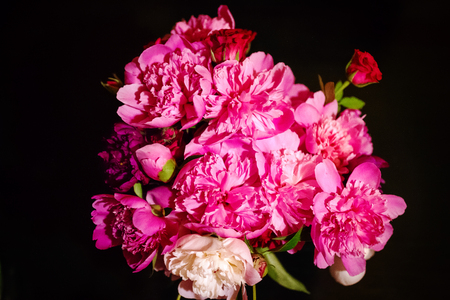 Colorful flowers on black background - colorful peonies Stock Photo