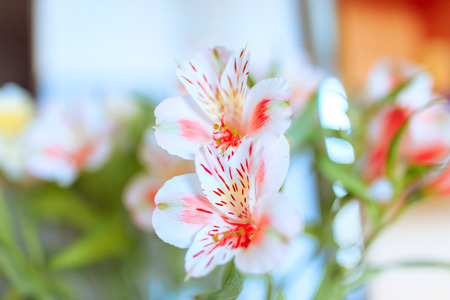 Spring flowers, delicate and fragrant flowers 写真素材