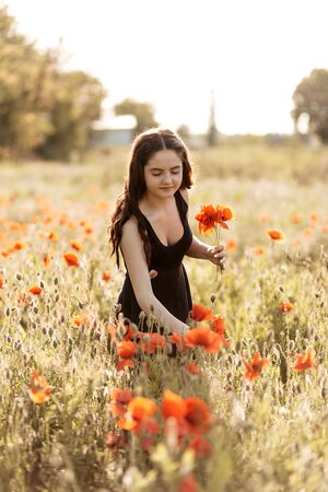Sunset poppy field and a young woman collects a bouquet of poppies