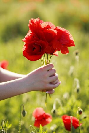 Beautiful, red bouquet of poppies on a blurred field background