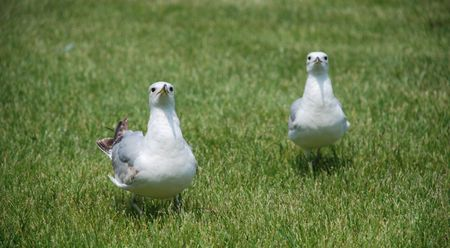 two sea gulls