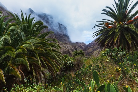Masca village in mountain gorge the most visited tourist attraction of Tenerife, Spain. 写真素材 - 121182733