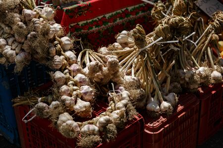 bunch of Garlic on the counter of the vegetable market. Close-up and top view of fresh vegetables on store shelves. Ingredients for salads and light snacks. Harvest from the farm Reklamní fotografie