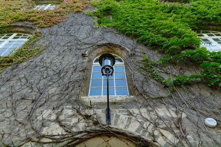 picturesque ivy weaves along the wall of the wall of St Johns College building