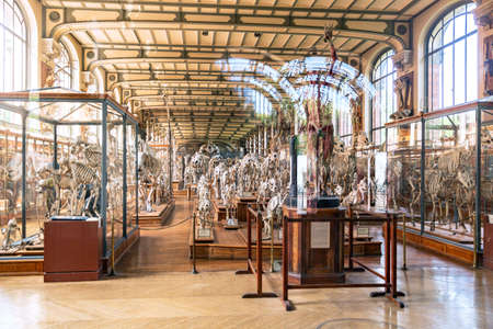Paris, France - June 06, 2018: interior of Gallery of Paleontology and Comparative Anatomy in National Museum of Natural History