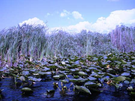 Swamp in Everglades park