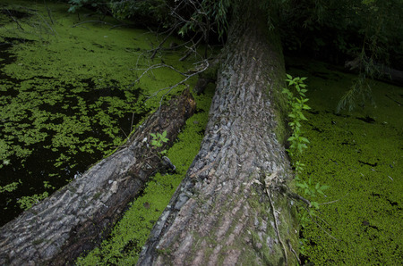 swampy: a log in the water