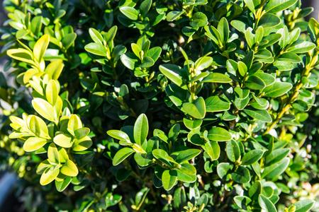 Green bush in sunny spring day.