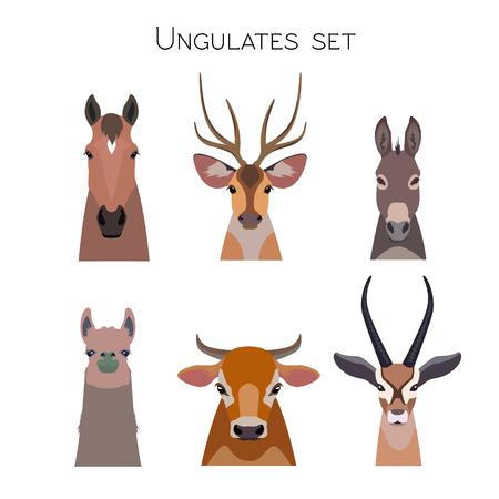 ばらばらベクトル有蹄類では、動物セット有蹄類。・ ラマ鹿、カモシカ、分離されたロバ馬牛牛のイラスト。ポスター バナー、印刷、広告、web デ  イラスト・ベクター素材