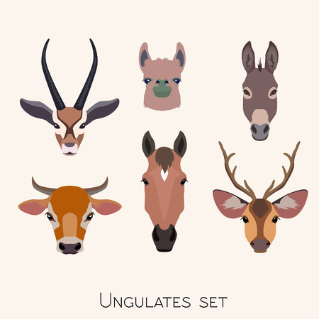 Vector ungulates cloven hoofed animals head set. Lama, deer antelope, donkey, horse cow bull illustration isolated. Poster banner print advertisement, web design element object. Flat, cartoon style Ilustração
