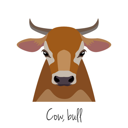 domestic animals: Vector cow, bull head. Animals of a farm. flat cartoon style brown calf face isolated, poster, banner, print advertisement web design element. Domestic animals. livestock.