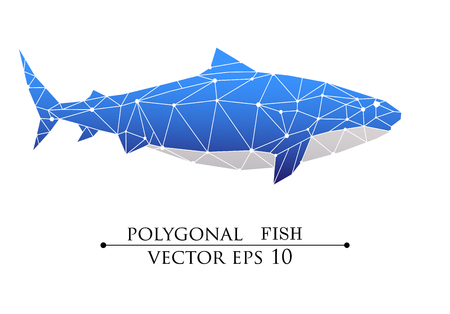 Vector Polygonal big shark, grampus. Blue and white design object