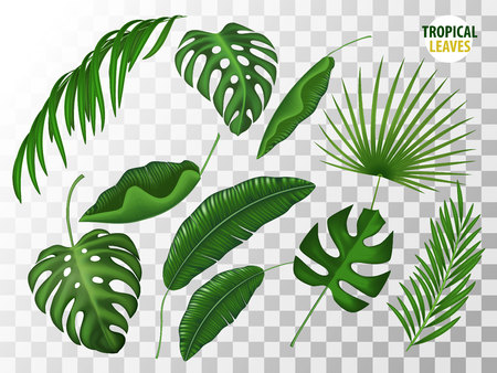 Tropical leaves vector realistic set  イラスト・ベクター素材